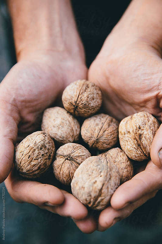 Hands holding walnuts by Andrey Pavlov for Stocksy United