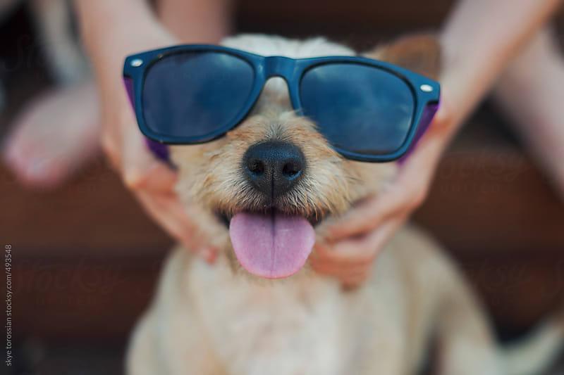Happy dog wearing sunglasses. by skye torossian for Stocksy United