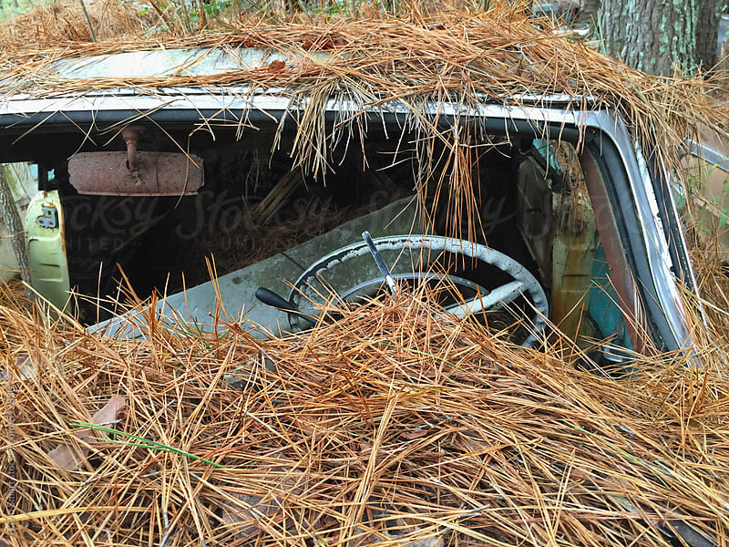 Close-up of an abandoned car covered with pine needles by David Smart for Stocksy United