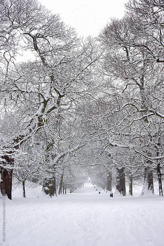 Avenue of snow-covered trees in winter by Kirstin Mckee for Stocksy United