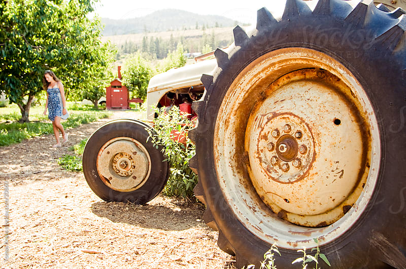 cherry farm tractor by Tomas Kraus for Stocksy United