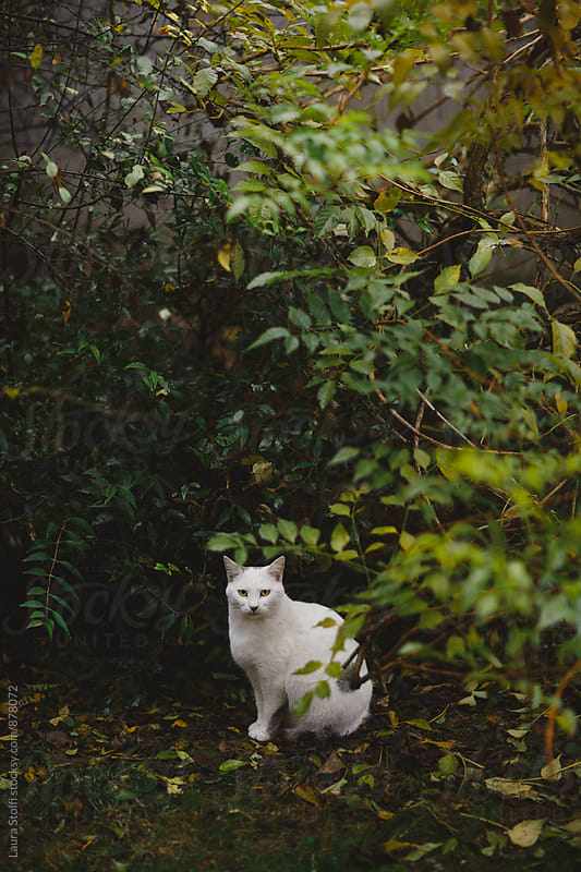 Close up oc cat sitting in front of plants in garden by Laura Stolfi for Stocksy United