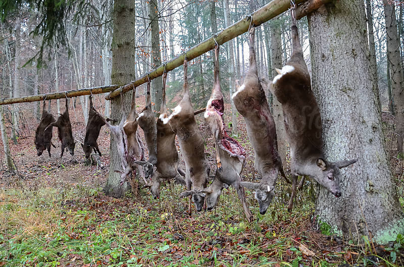 Hunting by Gabriel Ozon for Stocksy United