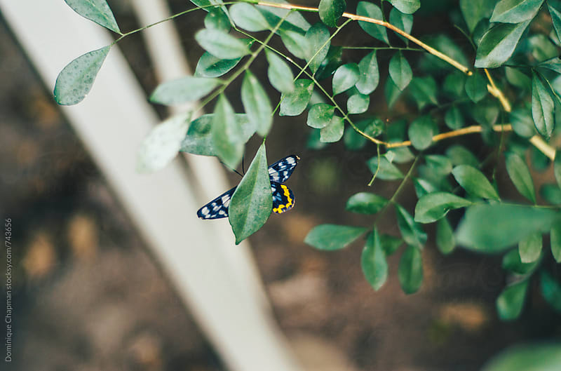 Colourful butterfly underneath a bush by Dominique Chapman for Stocksy United