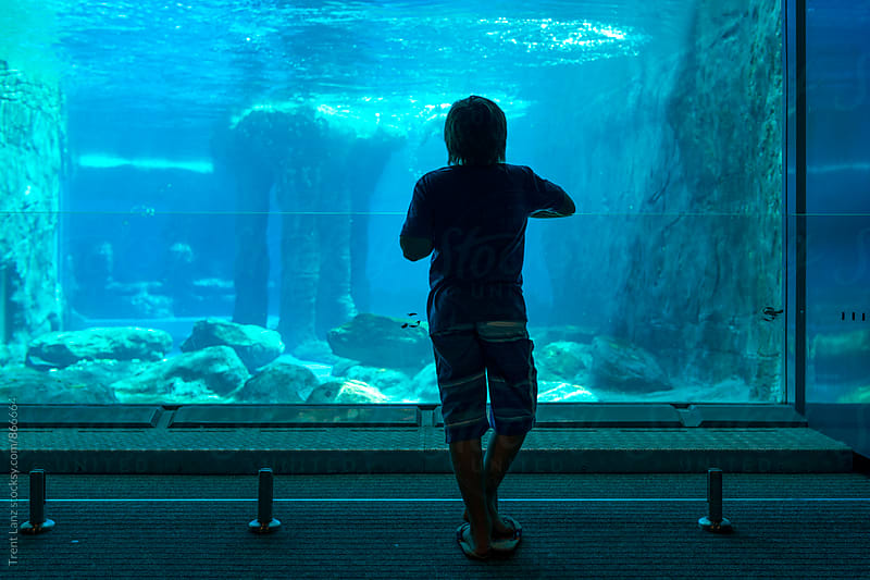 Back view of boy in blue oceanarium aquarium by Trent Lanz for Stocksy United