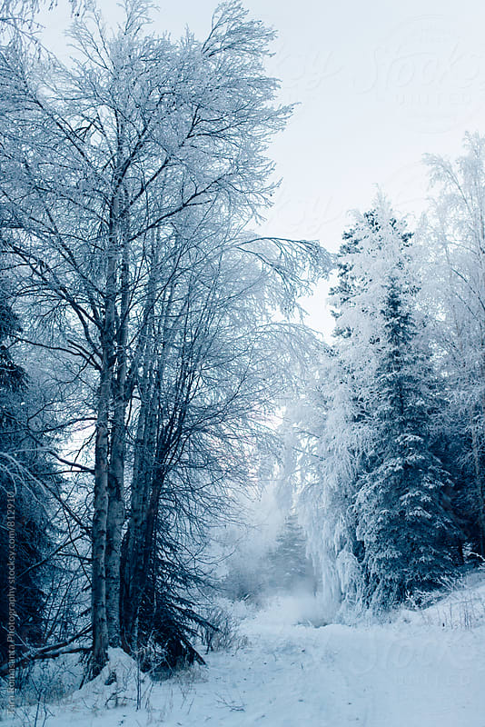snowy path and snow and frost covered trees by Tara Romasanta for Stocksy United