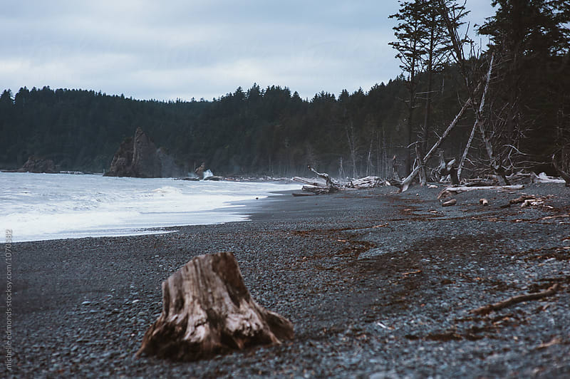 Driftwood on the Rocky Shore of the Pacific Ocean in Washington by michelle edmonds for Stocksy United