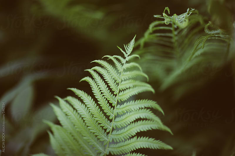 Fern Leaves #5 by ALICIA BOCK for Stocksy United
