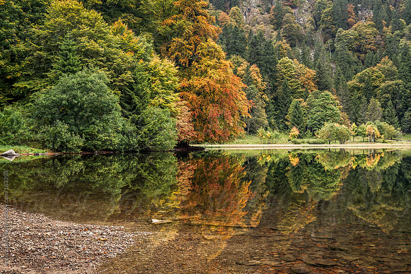 Lake in the Black Forest During Autumn by Andreas Wonisch for Stocksy United