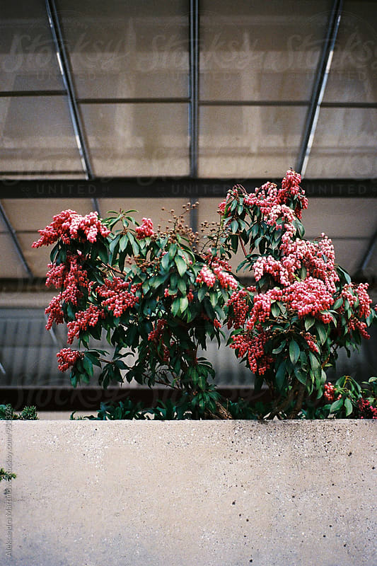 Bushy Flower by Aleksandra Martinovic for Stocksy United