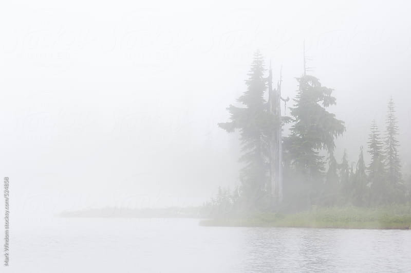 Trees on a lakeshore in fog by Mark Windom for Stocksy United