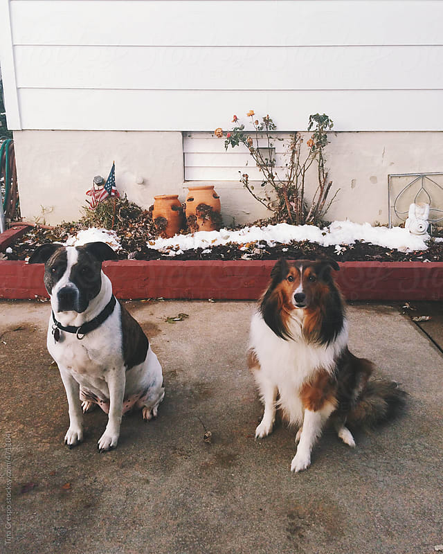 Best Dog Friends by Tina Crespo for Stocksy United