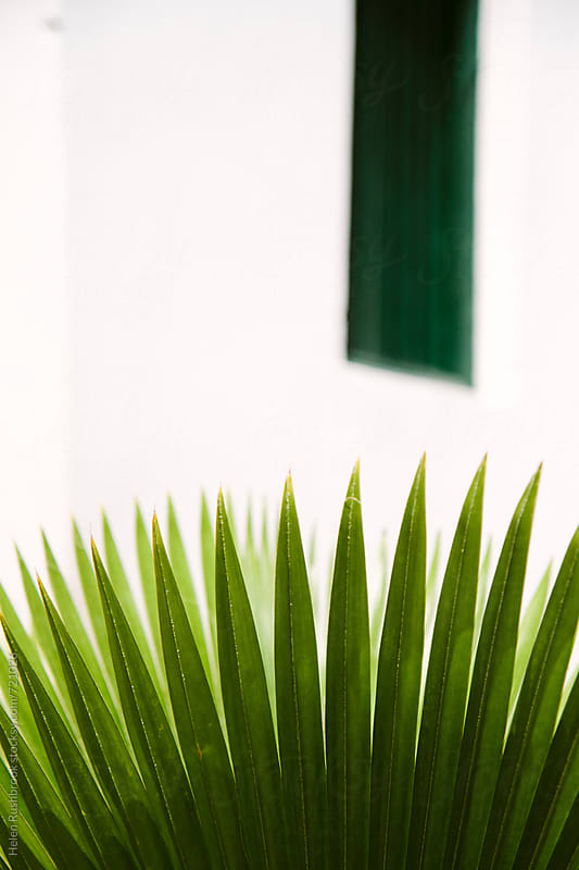 A bright green palm leaf against a white wall with a green shuttered window by Helen Rushbrook for Stocksy United