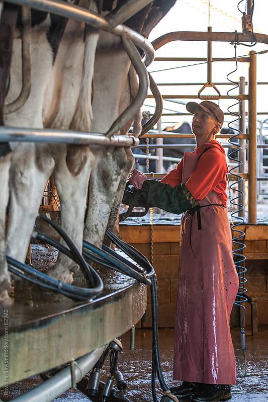 Farmer Milking Cows by Rowena Naylor for Stocksy United