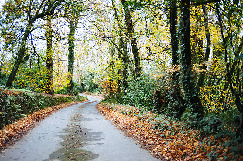 Country lane winding through trees in autumn by Suzi Marshall for Stocksy United