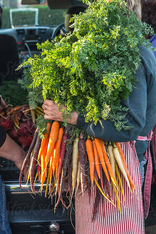 woman holding a large bunch of heirloom organic carrots by Gillian Vann for Stocksy United
