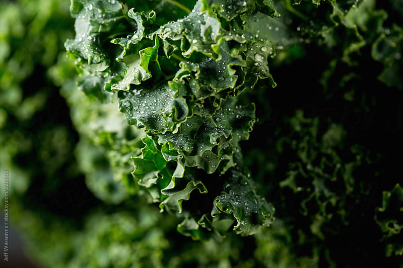 Raw Kale in Close by Studio Six for Stocksy United