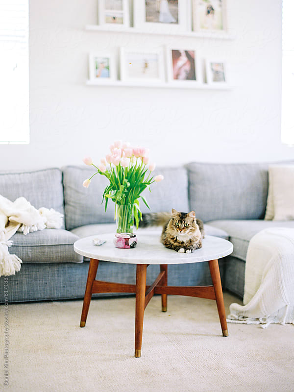 Cat and a coffee table in living room by Daniel Kim Photography for Stocksy United