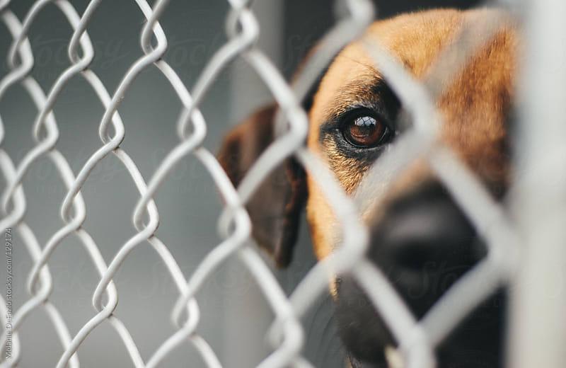 Shelter Dog by Melanie DeFazio for Stocksy United