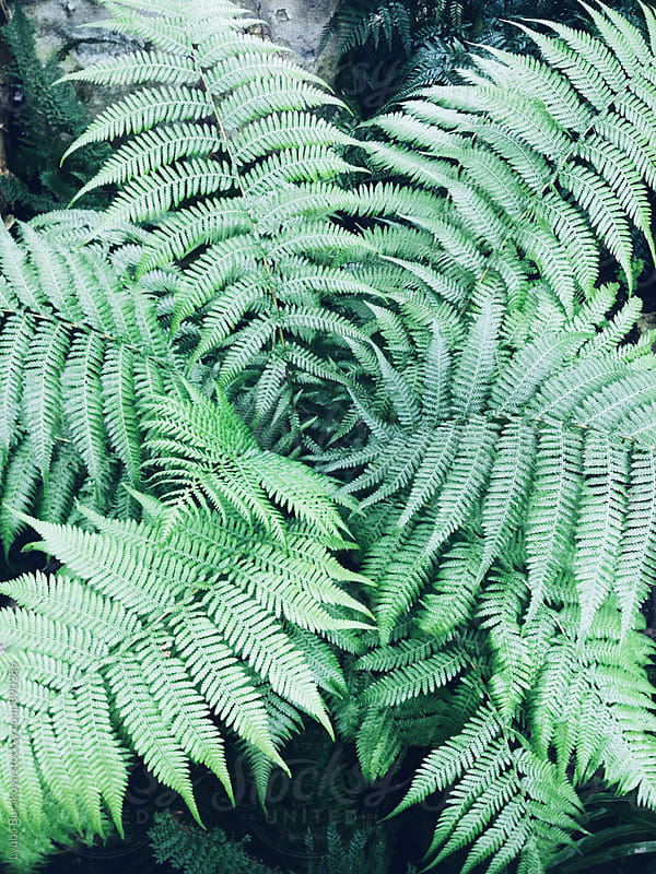Fern leaves in a forest by Lyuba Burakova for Stocksy United