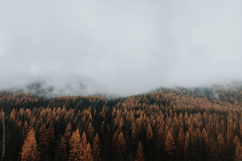 Foggy Montana mountains in the fall by TJ Macke for Stocksy United