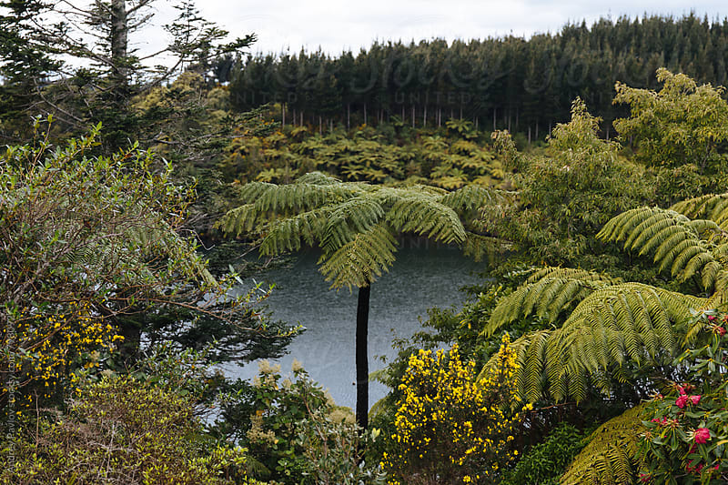 View of rainforest and lake by Andrey Pavlov for Stocksy United