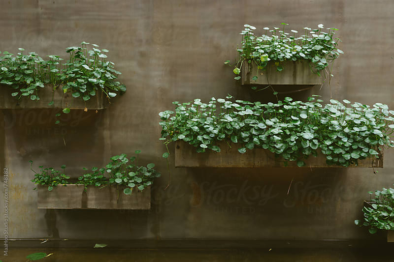 plants on the wall of a pool by Maa Hoo for Stocksy United