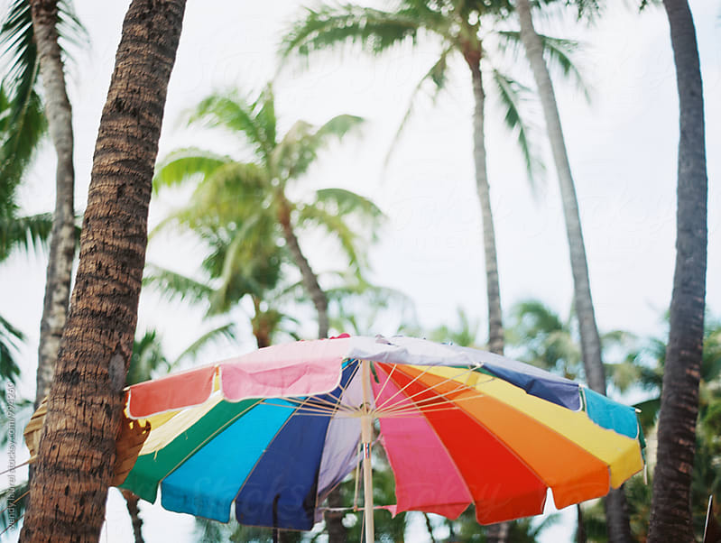rainbow beach umbrella against palm trees horizontal by wendy laurel for Stocksy United