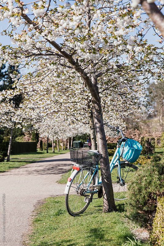 bicycle leaning again blossoming tree in a park by Lior + Lone for Stocksy United