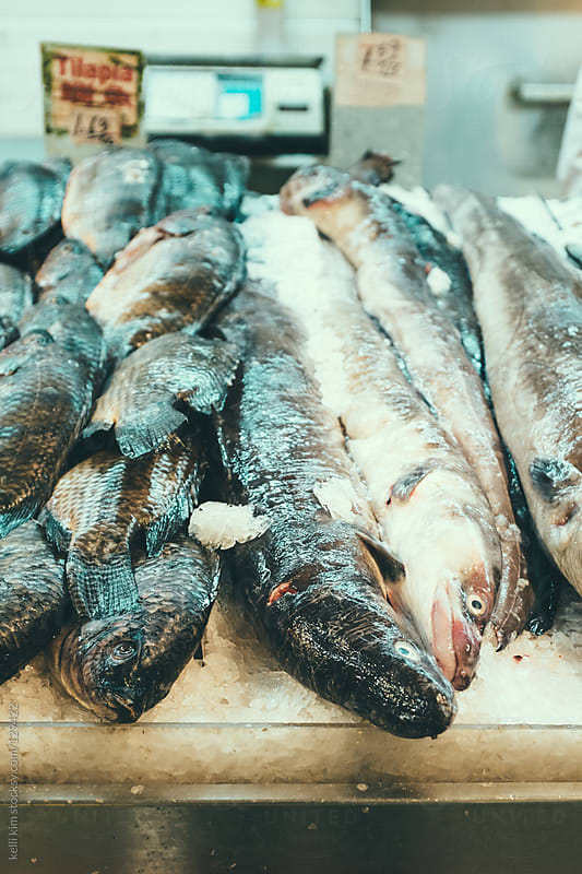 Raw eel for sale at Asian fish market by kelli kim for Stocksy United