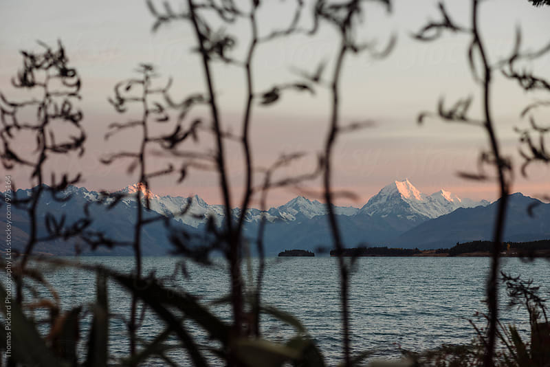 View of Aoraki / Mt Cook through flax plants at sunset, on lake Pukaki, New Zealand. by Thomas Pickard for Stocksy United