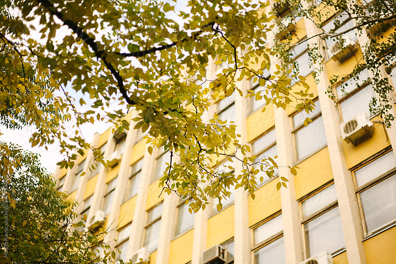 Yellow building through the yellow leaves by Marija Kovac for Stocksy United