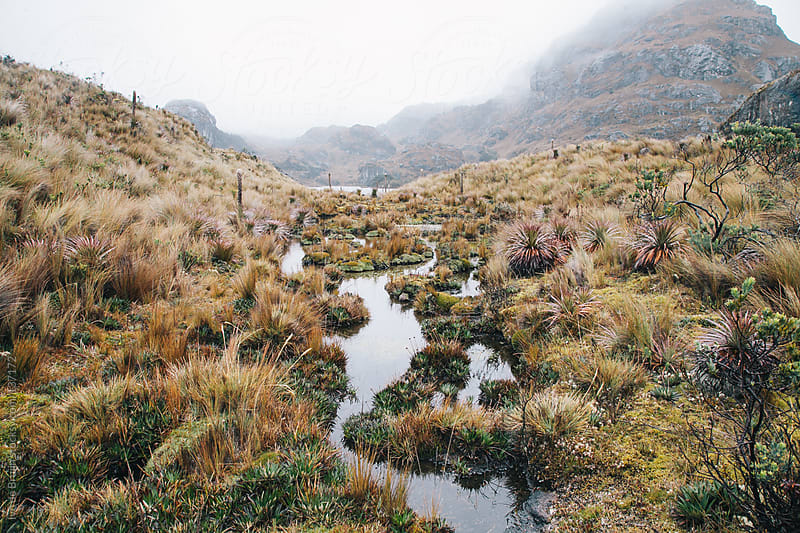 Empty foggy highland with grass and a small stream by Ivo de Bruijn for Stocksy United