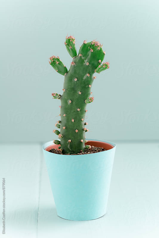 Mini succulent cactus  in pastel-coloured handmade paper flower pot by Elisabeth Coelfen for Stocksy United