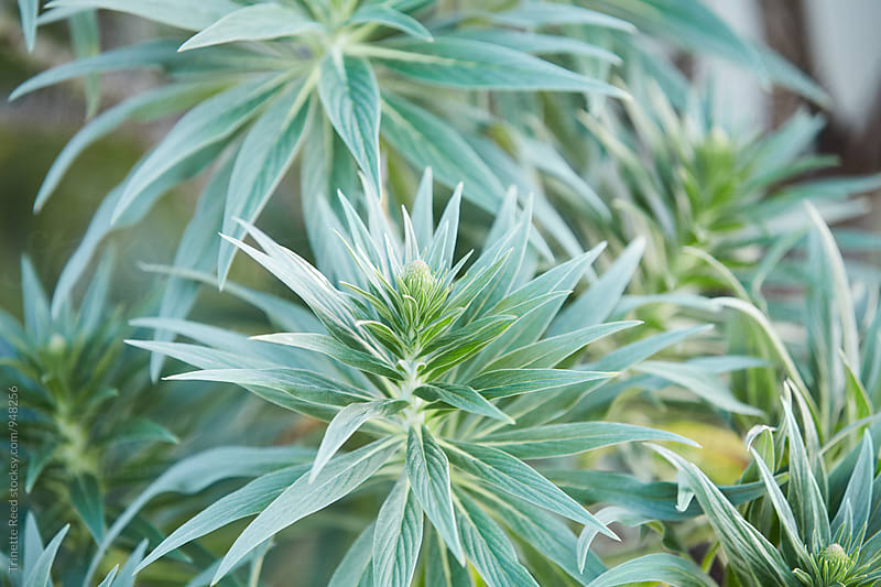 Closeup of green plant in garden by Trinette Reed for Stocksy United