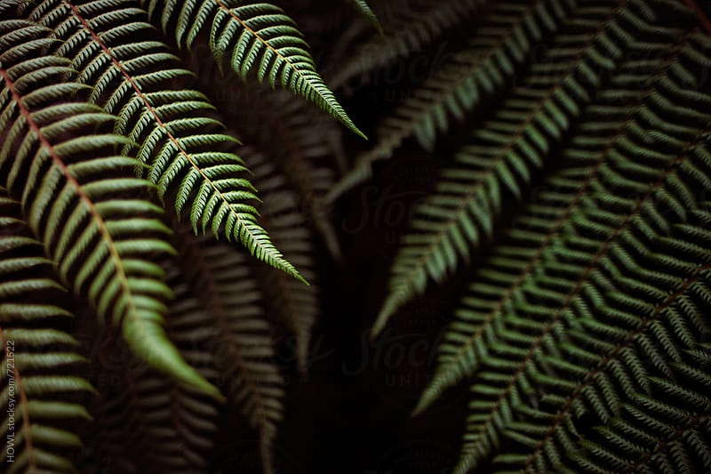 Beautiful long green summer ferns fall into the shadows by HOWL for Stocksy United