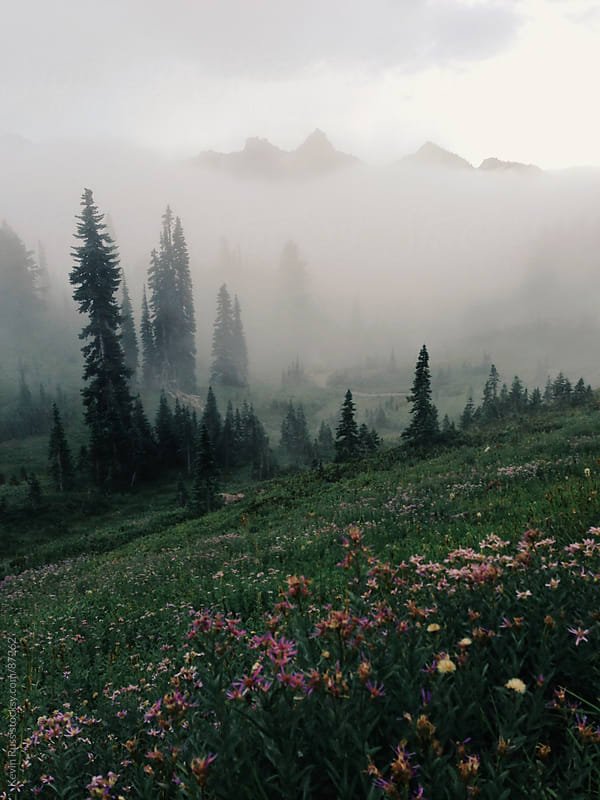 Washington Wildflowers by Kevin Russ for Stocksy United