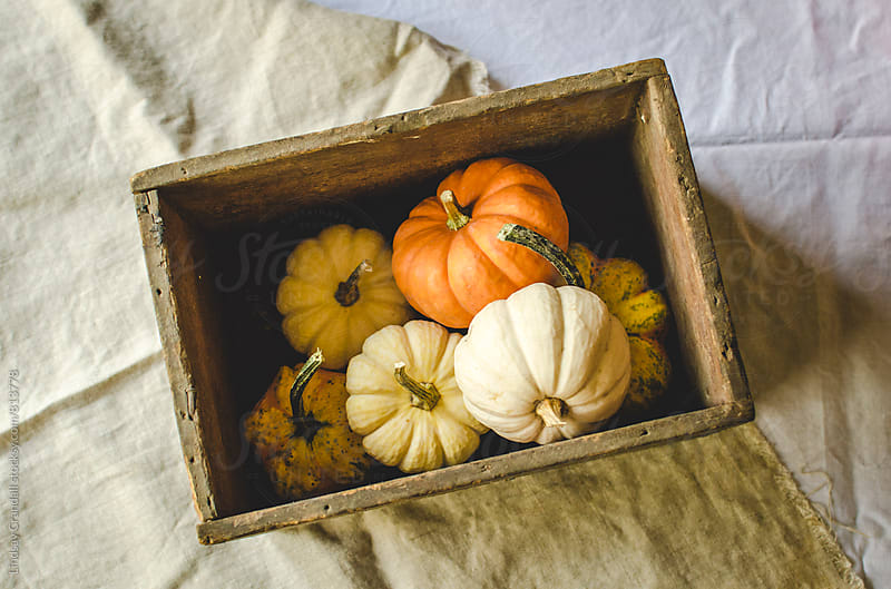 Small pumpkins in a crate on a table by Lindsay Crandall for Stocksy United