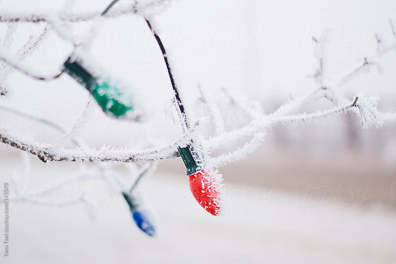 Christmas tree lights covered in frost while still on a tree by Tana Teel for Stocksy United