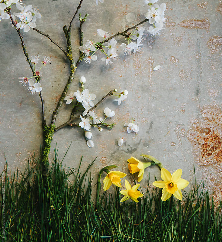 Blossom, daffodils and grass. Floral collage. by Helen Rushbrook for Stocksy United