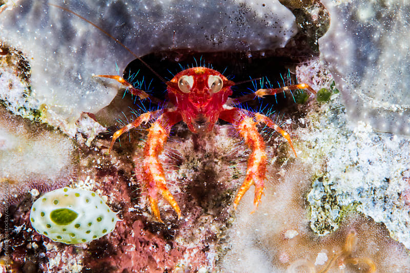squat lobster hide in the hole by Song Heming for Stocksy United