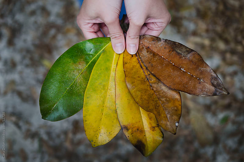 Woman's hands hold magnolia leaves in various colors by Cara Dolan for Stocksy United