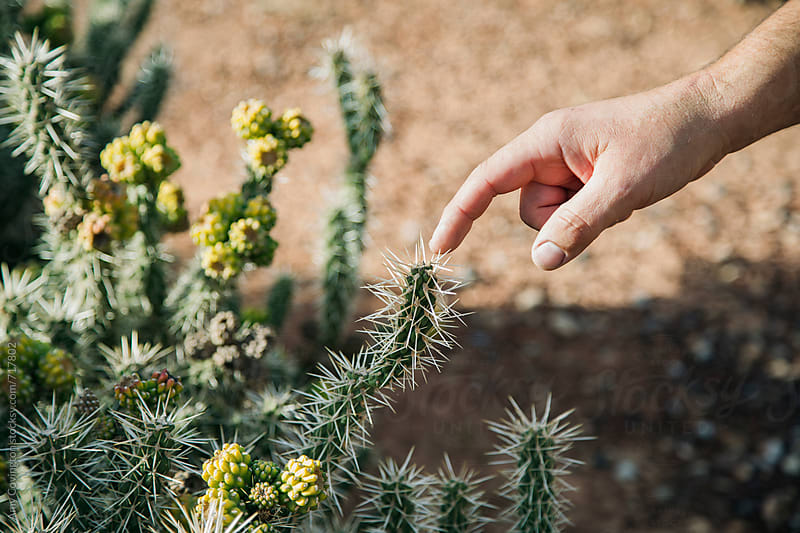 A man touching a cactus thorn by Amy Covington for Stocksy United