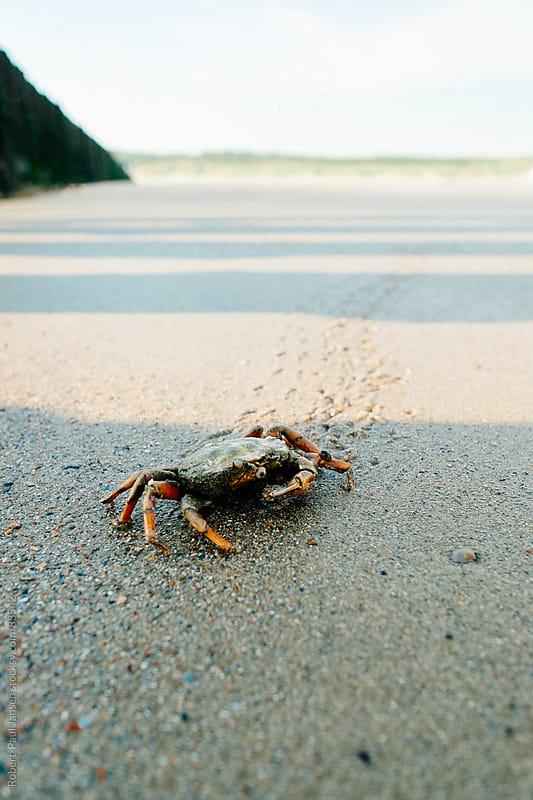 Crab Running by Robert-Paul Jansen for Stocksy United
