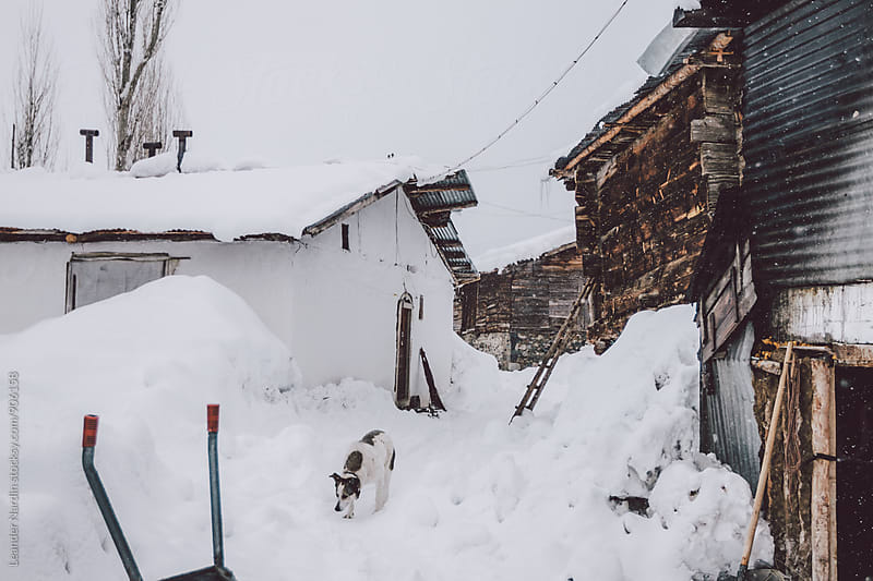 snowcovered trail through a small rural mountain village with a dog on the way, east anatolia, turkey by Leander Nardin for Stocksy United