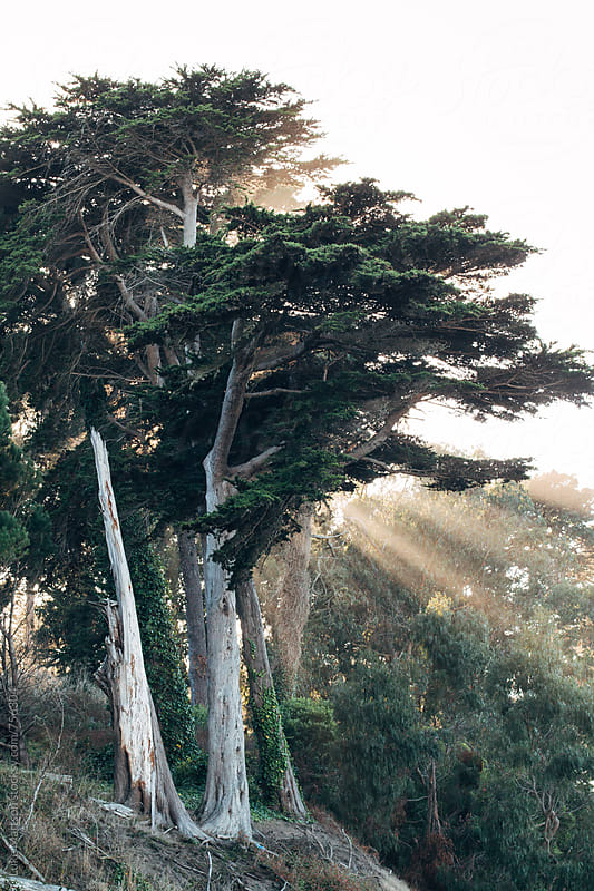 Rays Of Light Breaking Through Tree Canopy At Sunset by Luke Mattson for Stocksy United