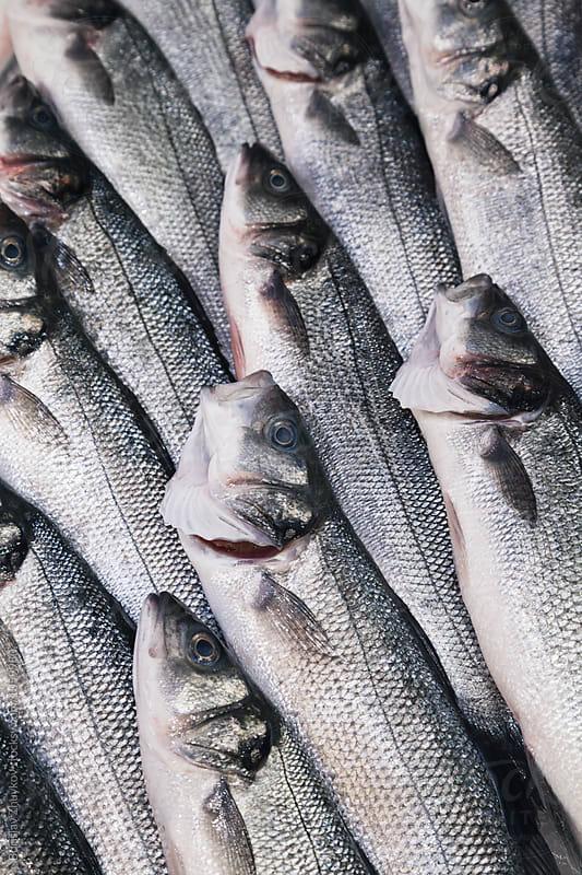 Bass at the fish market by Borislav Zhuykov for Stocksy United