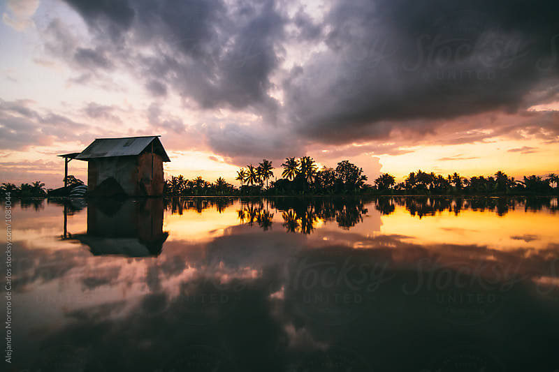 Reflection at a rice field filled of water in Asia at sunset by Alejandro Moreno de Carlos for Stocksy United