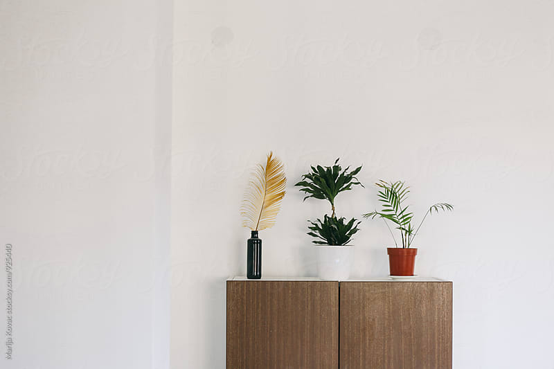 Plants indoor by Marija Kovac for Stocksy United