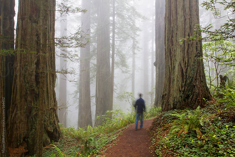 Lone man hiking through foggy coast redwood forest in California by Mihael Blikshteyn for Stocksy United